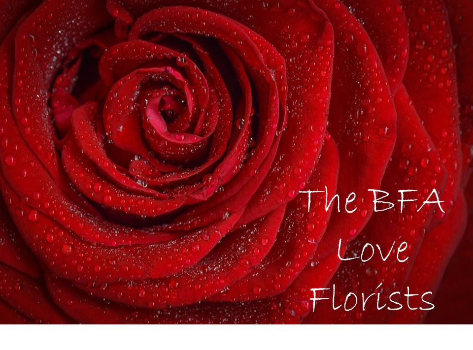 Valentines day, caring for your roses this Valentines Day