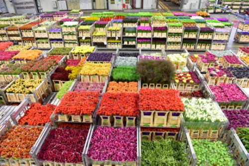 Dutch flower Auction visit for BFA members