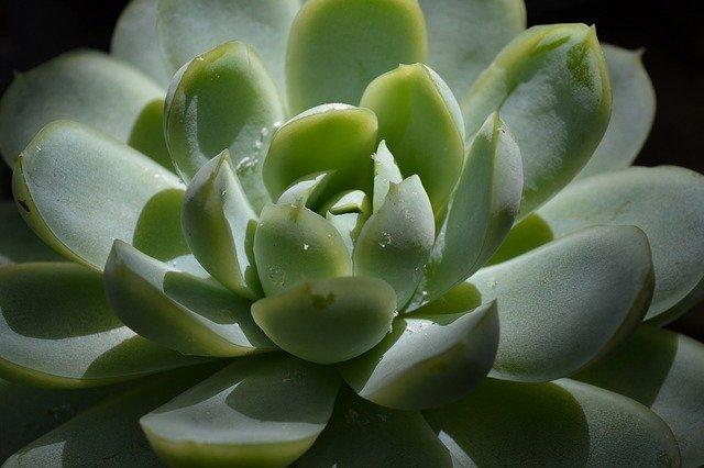 push back on plants